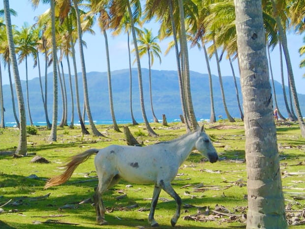 Horses near Las Galeras mostly walk free in this quiet and relaxed area.