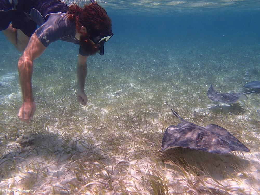 Swimming With Sting Rays